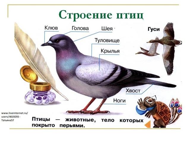 О ручном культиваторе: стриж, батрак, еж, краб, грач, паладин, умный сад