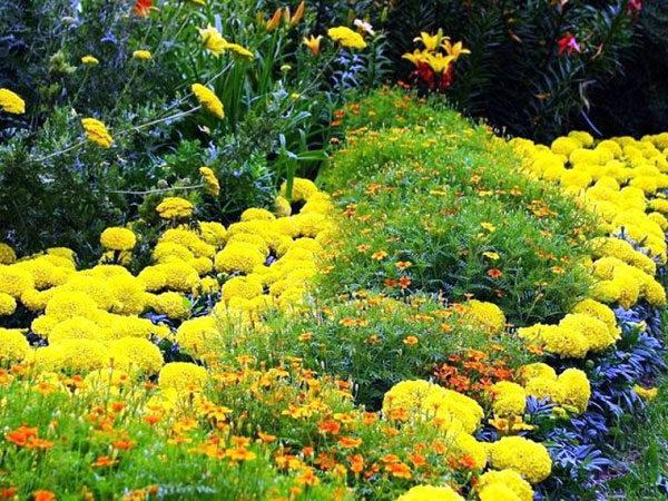 О желтых многолетних цветах: названия, описания и характеристики многолетников