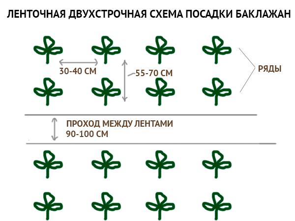 О баклажанах в теплице из поликарбоната: посадка и уход, правильное формирование куста