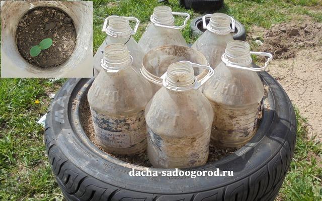О выращивании огурцов в покрышках: пошаговая инструкция, как сажать