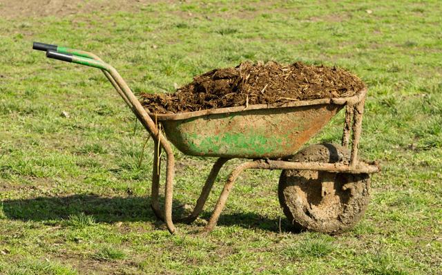 О выращивании капусты: что делать, чтобы культура хорошо выглядела, секреты урожайности