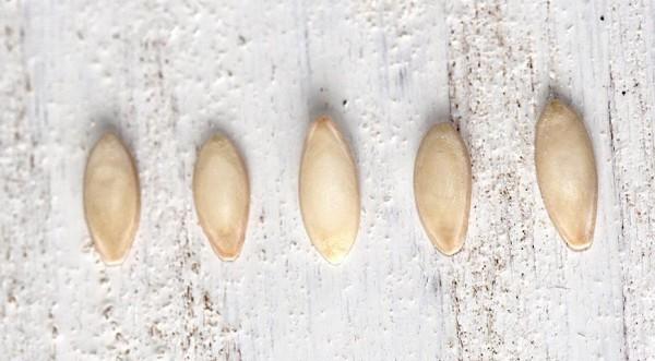 О подготовке семян огурцов к посадке: обработка и закаливание перед посевом