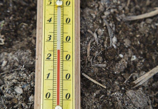 О правильной посадке огурцов на рассаду: выращивание, подкормка, уход