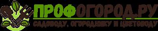 О посадке и уходе за хостой в открытом грунте и в домашних условиях