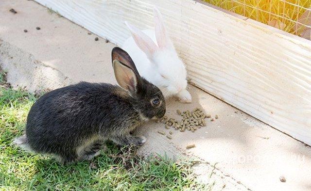 О комбикорме для кролика: состав, какой лучше, как сделать своими руками