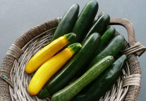 О выращивании кабачков в открытом грунте и хитрыми способами: в бочке, шине, ящике