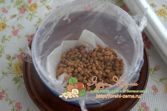 О проращивании чечевицы в домашних условиях: как замачивать, сколько нужно воды