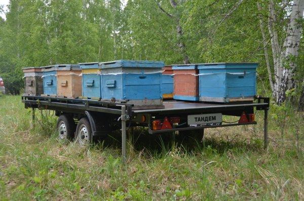 О прицепе для пчел для легкового автомобиля, телега для перевозки ульев