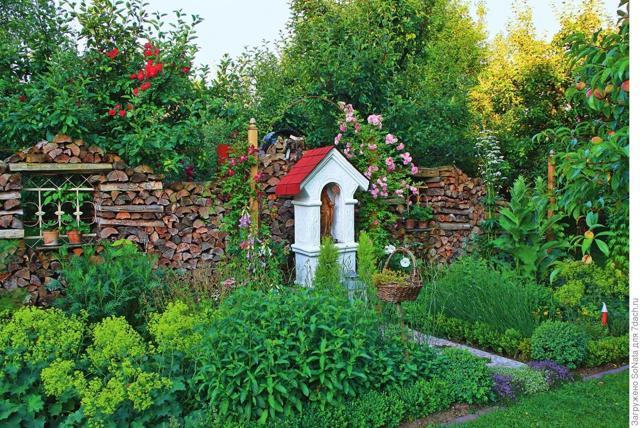 О пряных травах: сорта для выращивания на огороде, описание, свойства