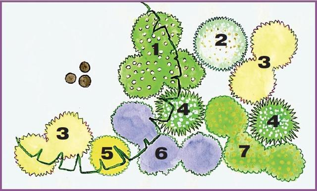 О необычных клумбах: декоративные цветники своими руками для многолетников