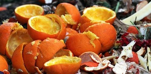 О кожуре апельсина: применение в удобрение на даче, огороде, в саду