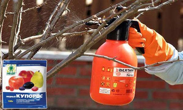 О применении медного купороса для томатов: как обрабатывать грунт весной
