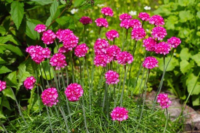О неприхотливых и долгоцветущих цветах многолетниках для сада: описание и уход