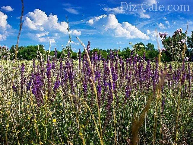 О почвопокровных многолетних цветах: характеристики стелющихся многолетников