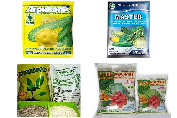 О подкормке рассады огурцов: чем можно полить, удобрить, обработать