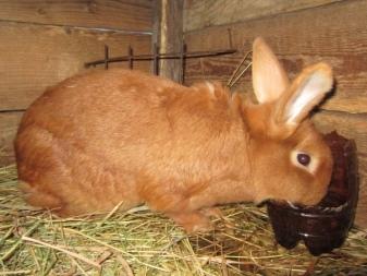 О кроликах мясных пород: какие породы самые лучшие для домашнего разведения