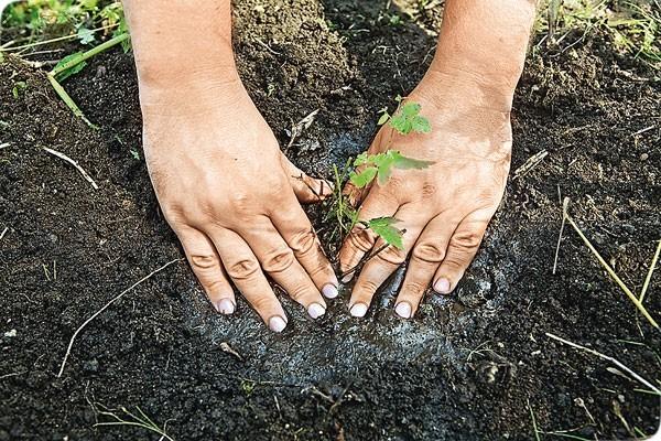 О пересаживании астильбы (когда можно и хорошо пересаживать растение)