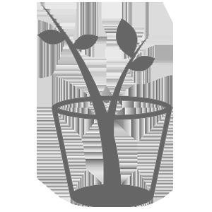 О розе артемис (artemis): описание и характеристики кустовой парковой розы