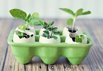 О посадке огурцов в торфяные таблетки: как сажать семя и вырастить рассаду