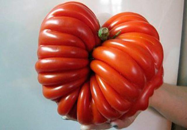 Лучшие сорта помидоров для открытого грунта, лучшие сладкие крупноплодные томаты