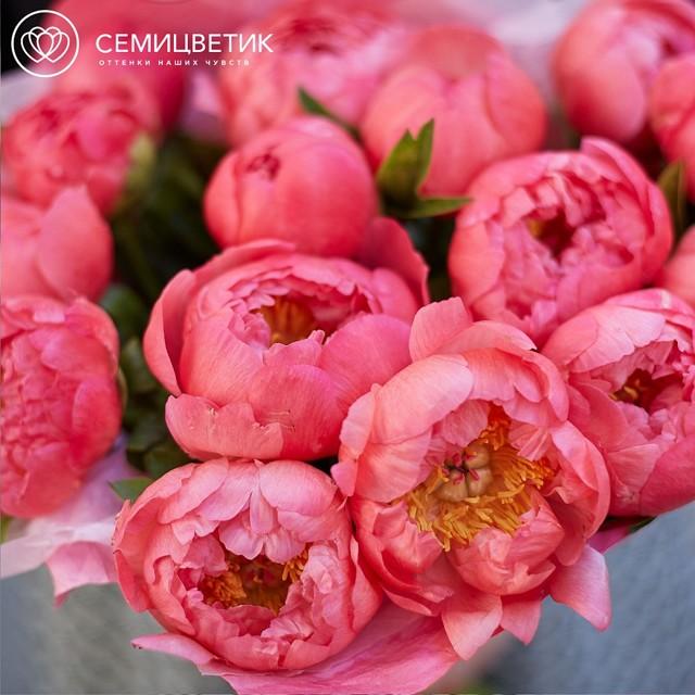 О пионах в вазе: как сохранить срезанные цветы и почему они меняют цвет