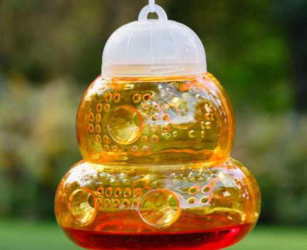 О ловушке для ос из пластиковой бутылки, как сделать своими руками приманку