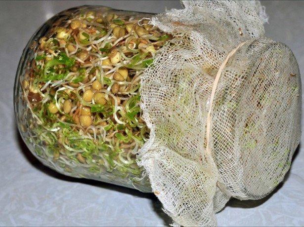 О том, как быстро прорастить фасоль в домашних условиях, питательные вещества