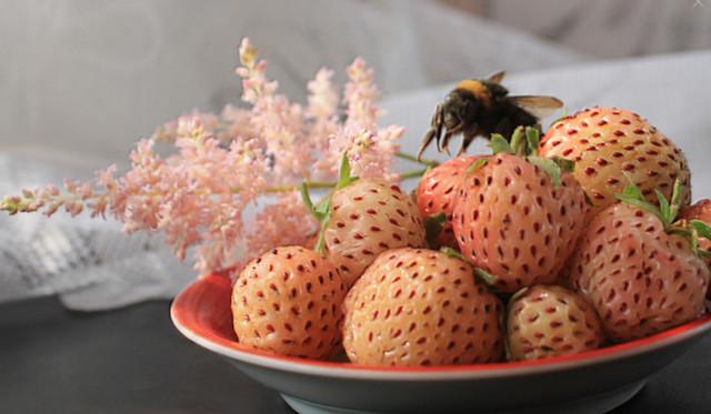 О клубнике пайнберри: описание сортов с розовыми и красными цветами